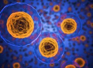 objawy bakteryjnego zapalenia pochwy